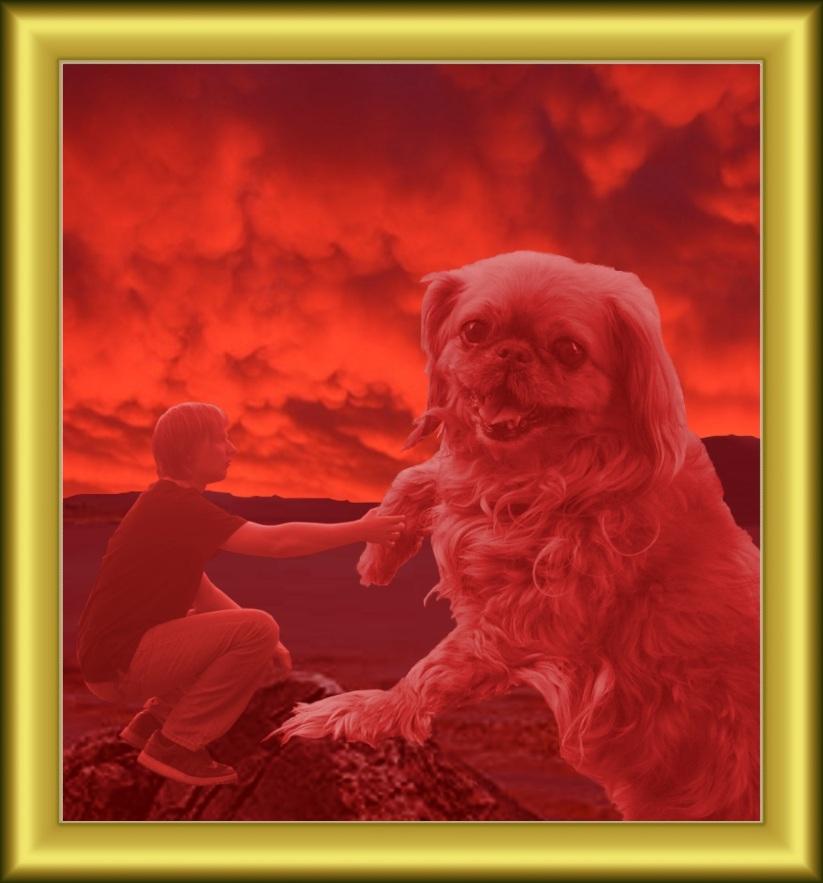 Dog Pic